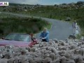 Video: Schapen in Schotland..
